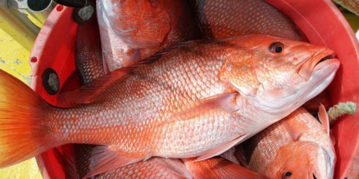 Red snapper weekend fishing to open for private anglers