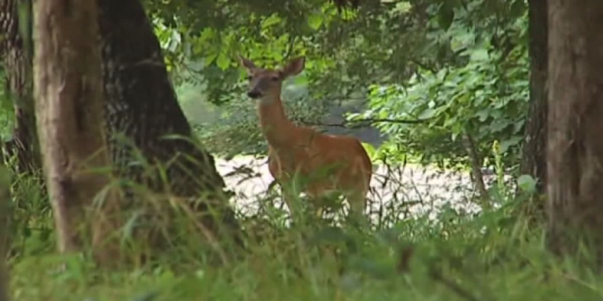 Laws for hunters change this year