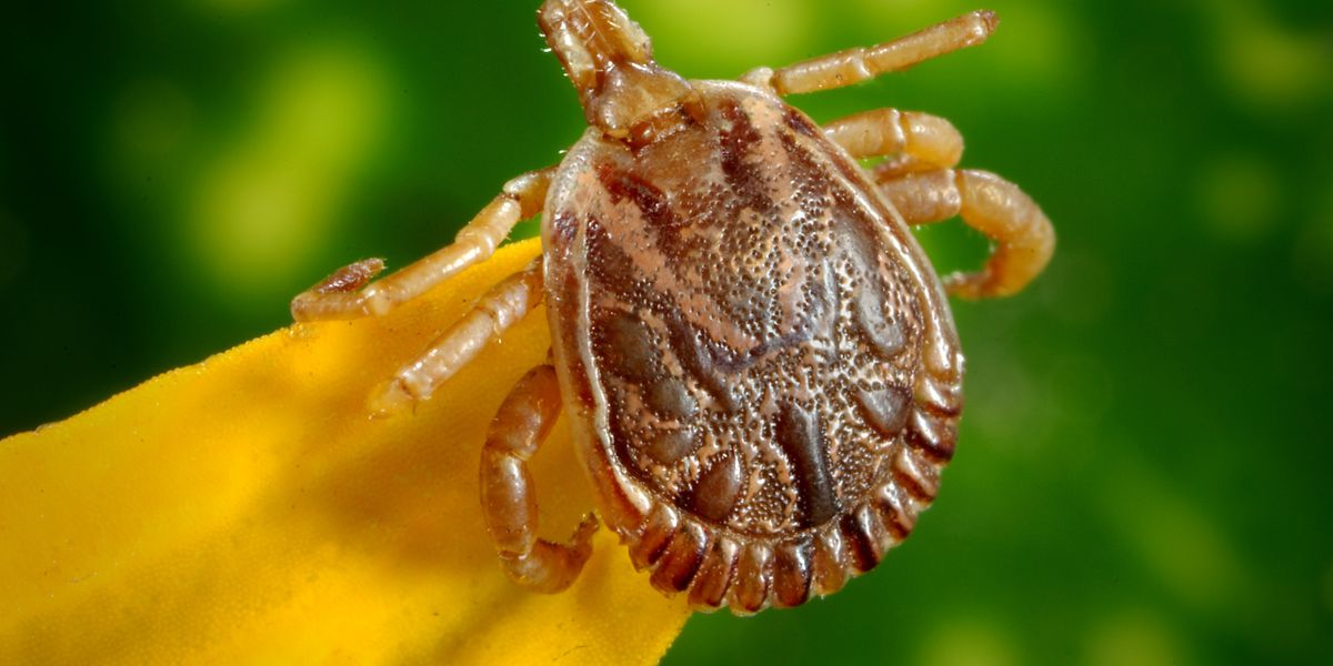 How to protect yourself this tick season