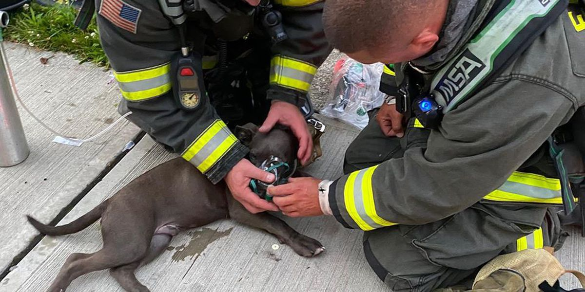 Euclid firefighters save puppy after his home catches fire