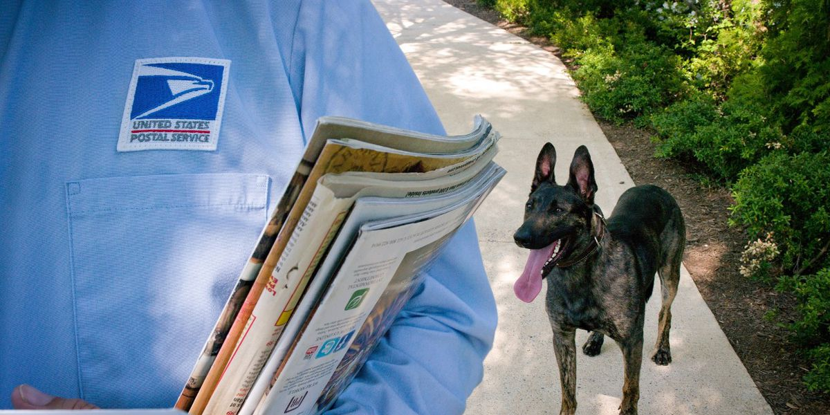National dog bite awareness week starts today
