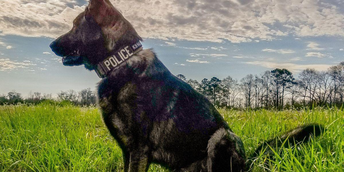 Help Clanton police K-9 Max get new protection gear!
