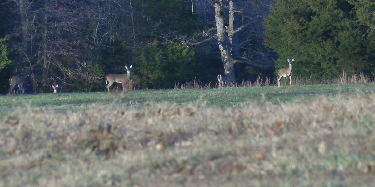 Deer found in Independence County tests positive for CWD