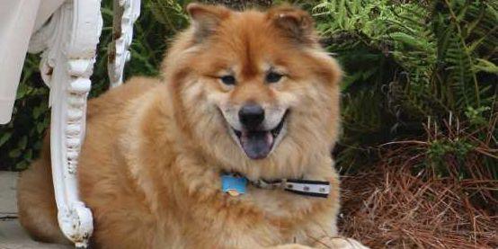 Alabama First Dog Bear passes away