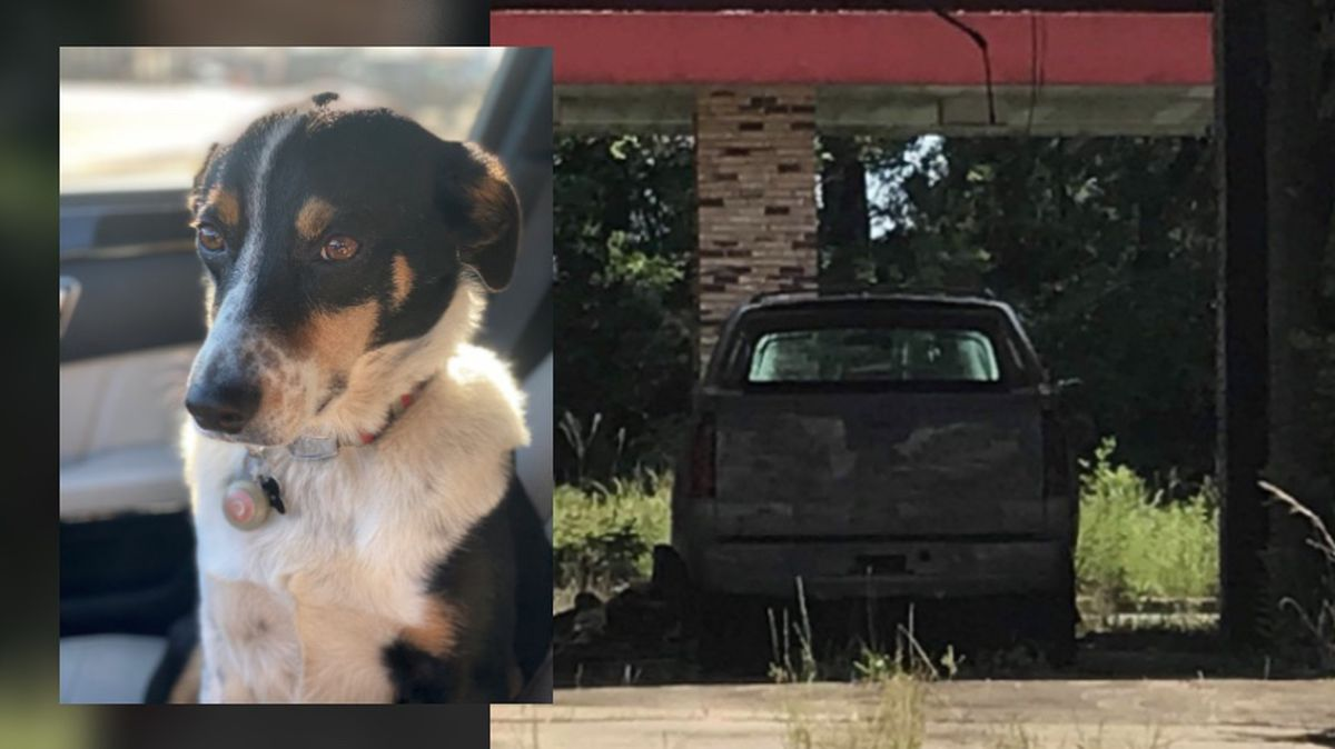 Colorado man finds stolen truck at abandoned Jackson car wash; Dog found days later