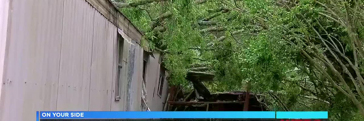 Tree falls on Pell City home - mom killed, son safe