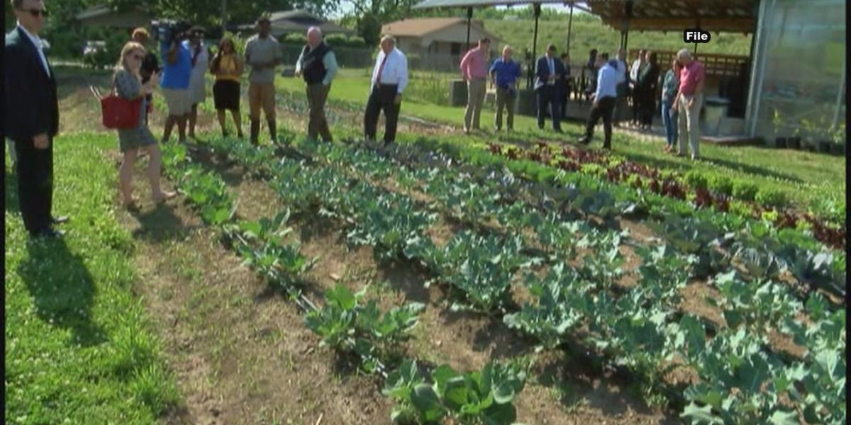 Jones Valley Teaching Farm among other organizations to possibly get funding cut