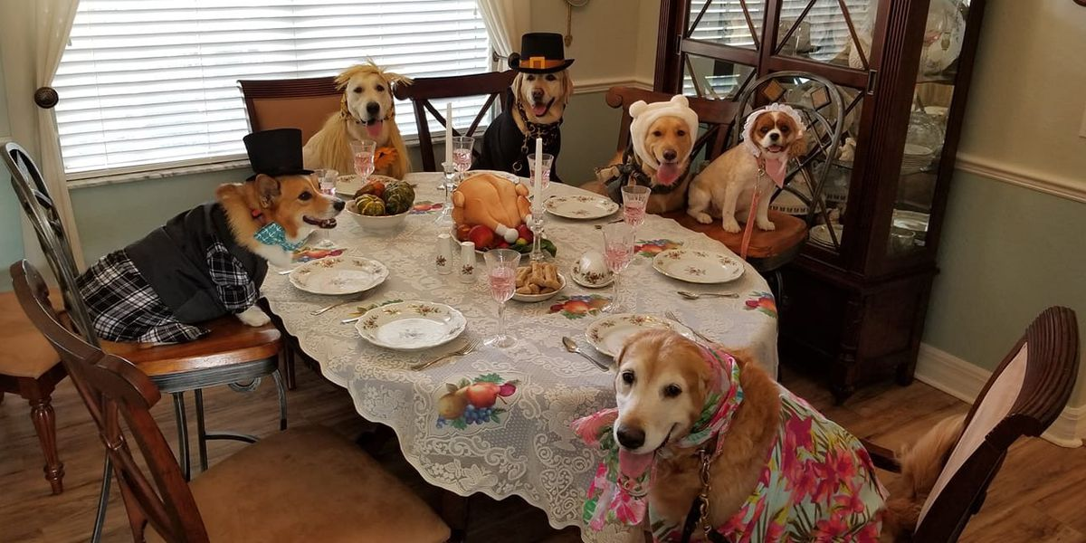 INCREDIBLE: Therapy dogs in Florida pose for Thanksgiving-inspired photo