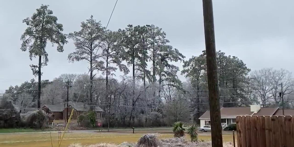 Iced tree limb falls in Moulton neighborhood
