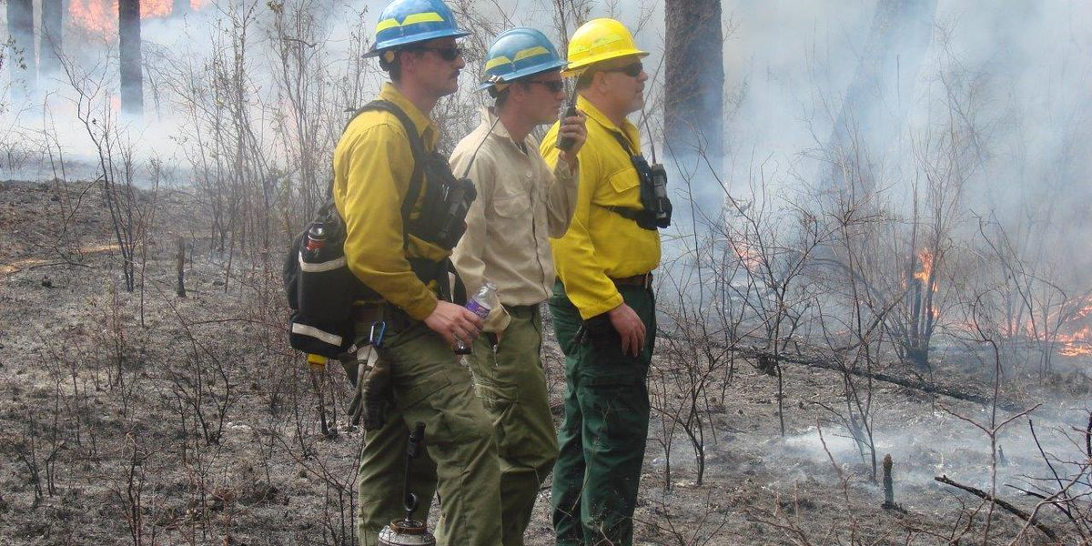 US Forest Service: Drought affecting Alabama forests and animals