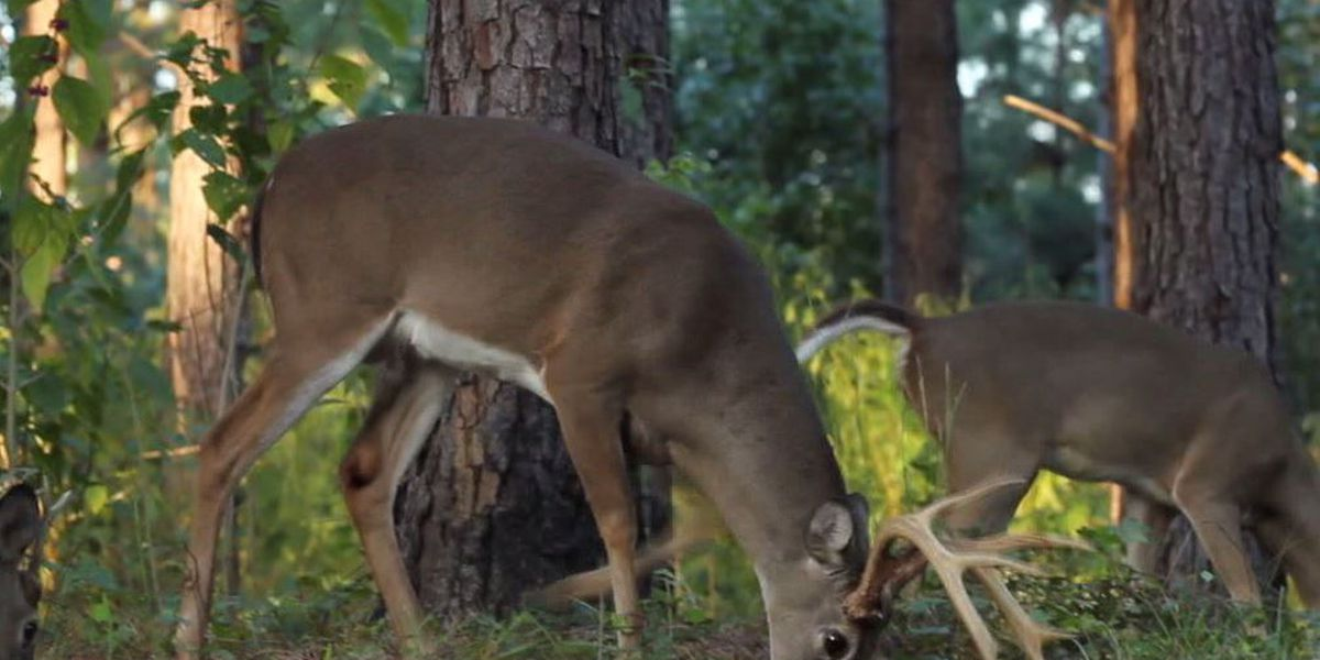 Deer on the move can be bad for your vehicle