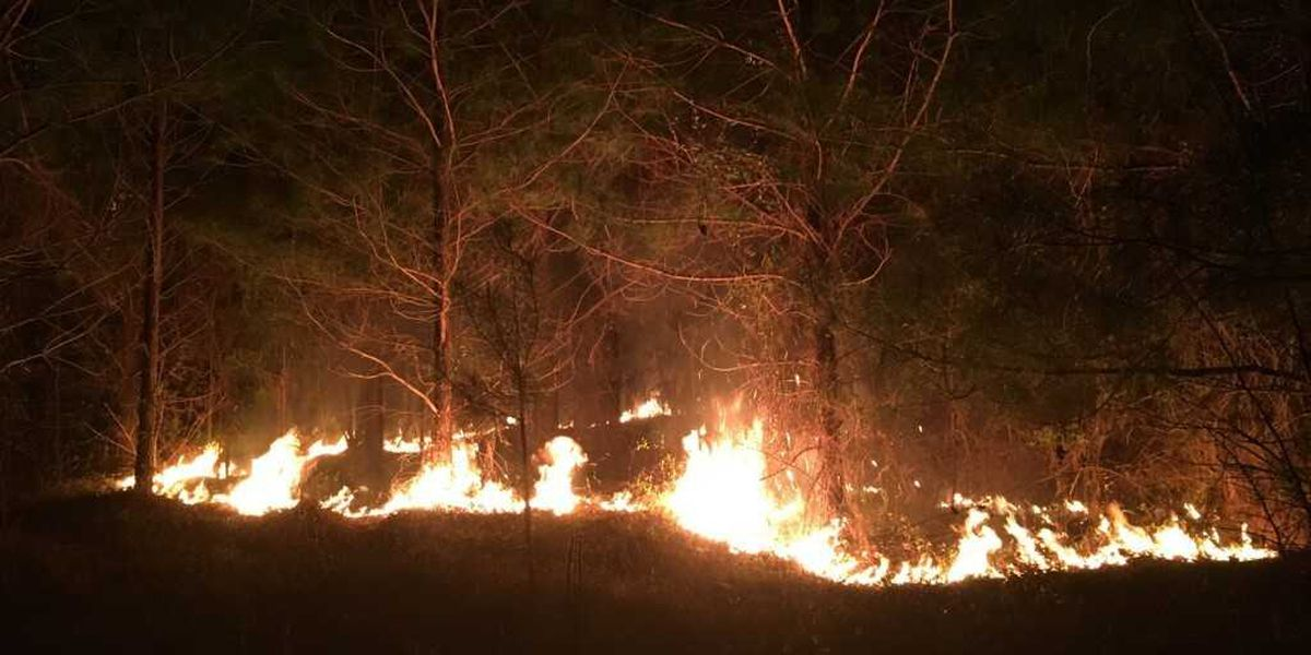 Chilton County forest fire burns 700 acres