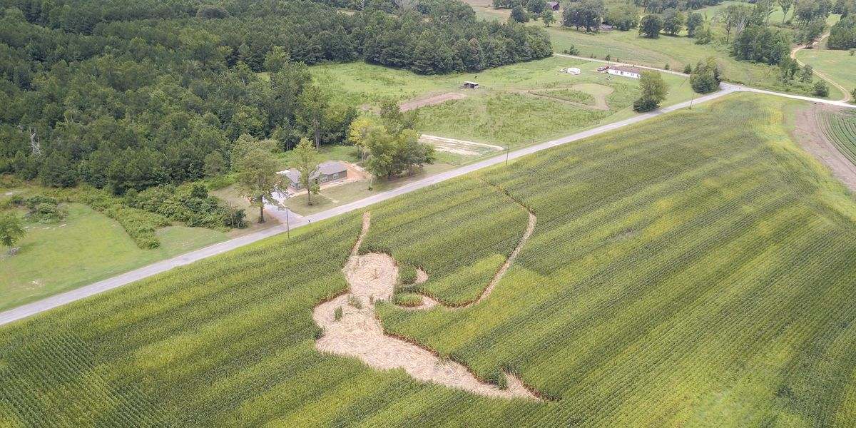 Five people arrested for leaving crop circles in Etowah County cornfield
