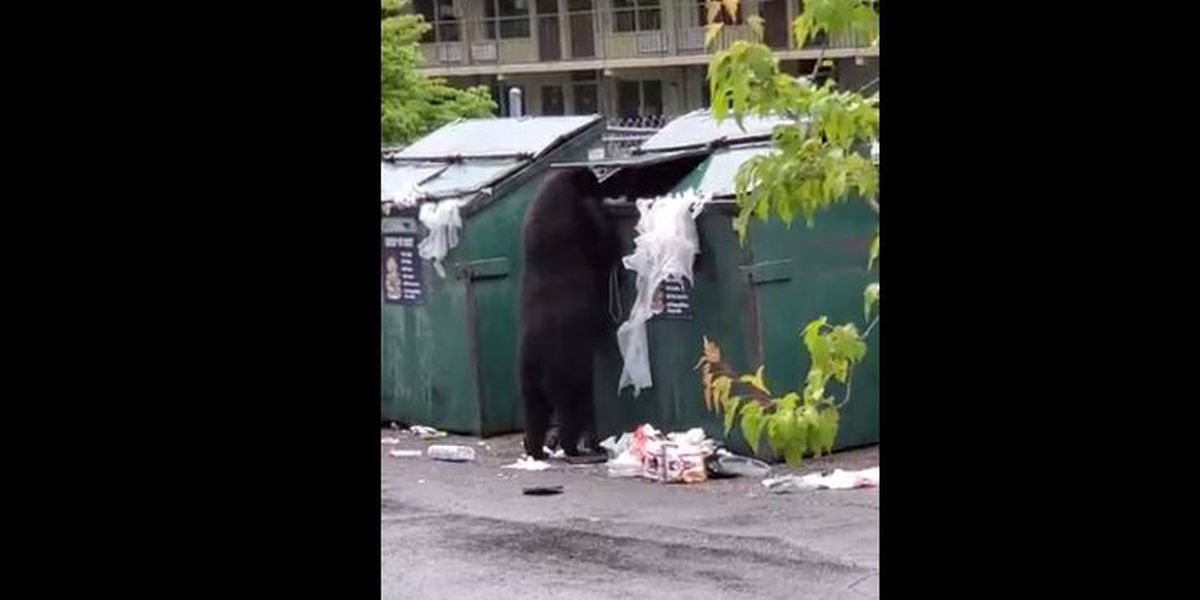 Bear rummages through dumpster in Gatlinburg