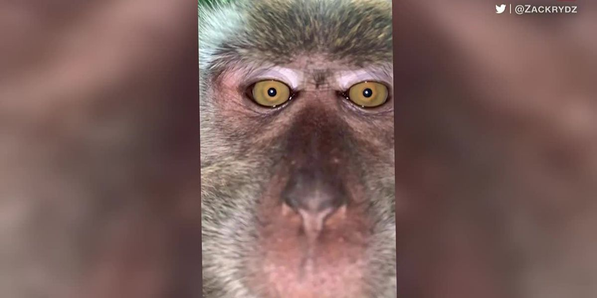 Take a look: Monkey takes selfies on man's phone; firefighters sing to lighten mood