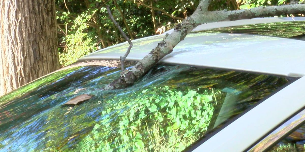 Woman warns drivers to be cautious after tree limb falls into her car in Mountain Brook