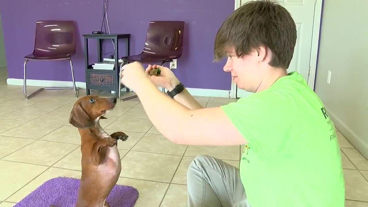 Beware of a fast wiener dog in Pelham