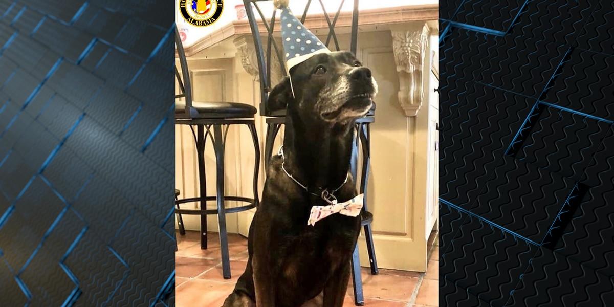 Hoover PD K9 Celebrates 7th birthday