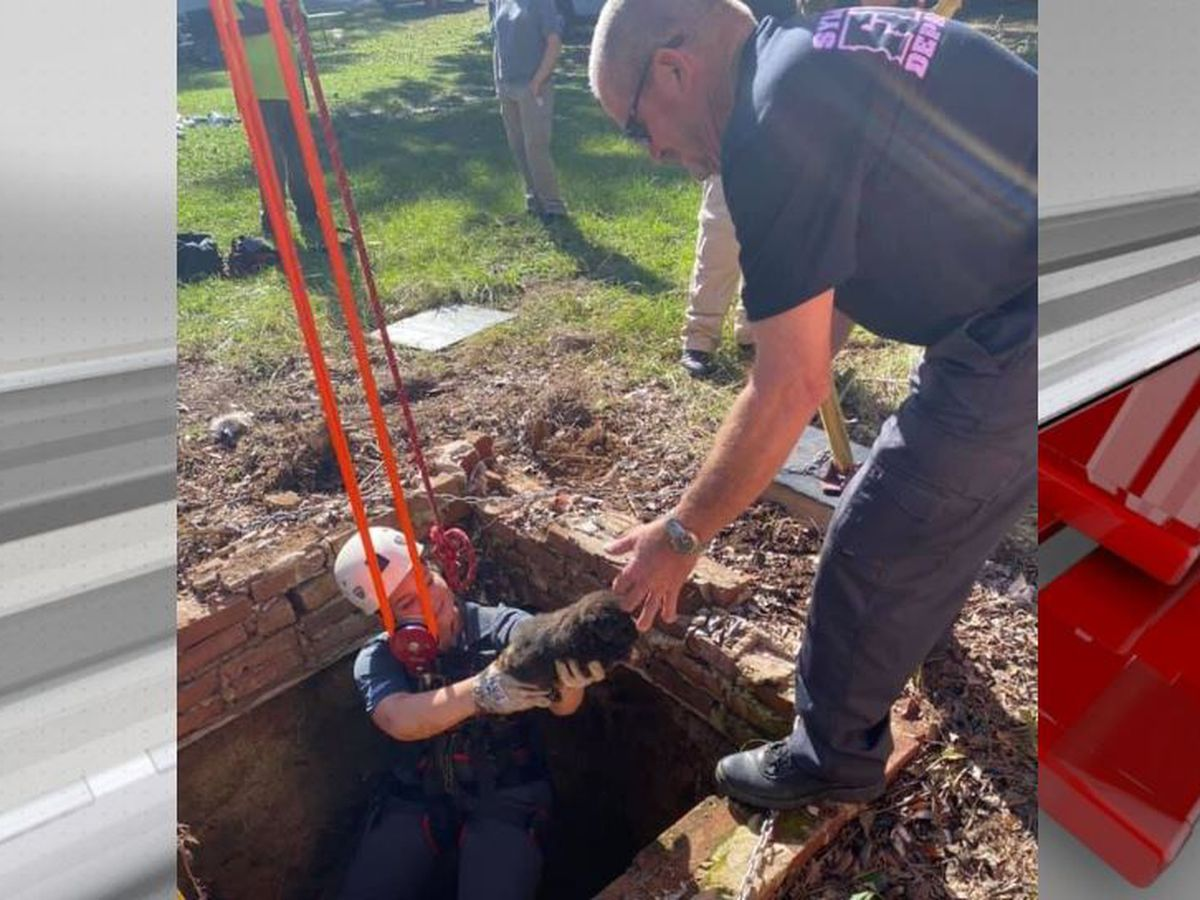 Sylacauga firefighters rescue puppies from open well