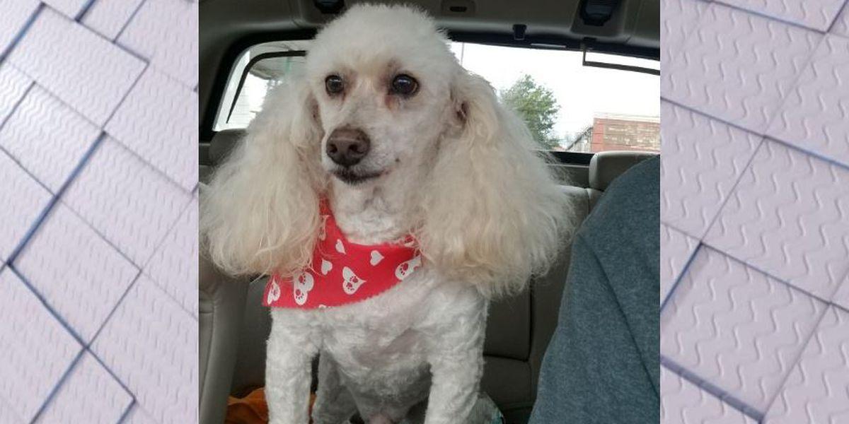 Man offering reward for info. on car, dog stolen from B'ham PD Headquarters' parking lot