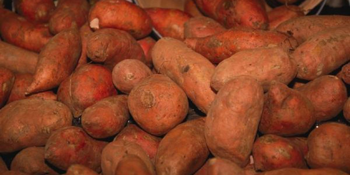 Ivey OKs naming sweet potato as Alabama's state vegetable