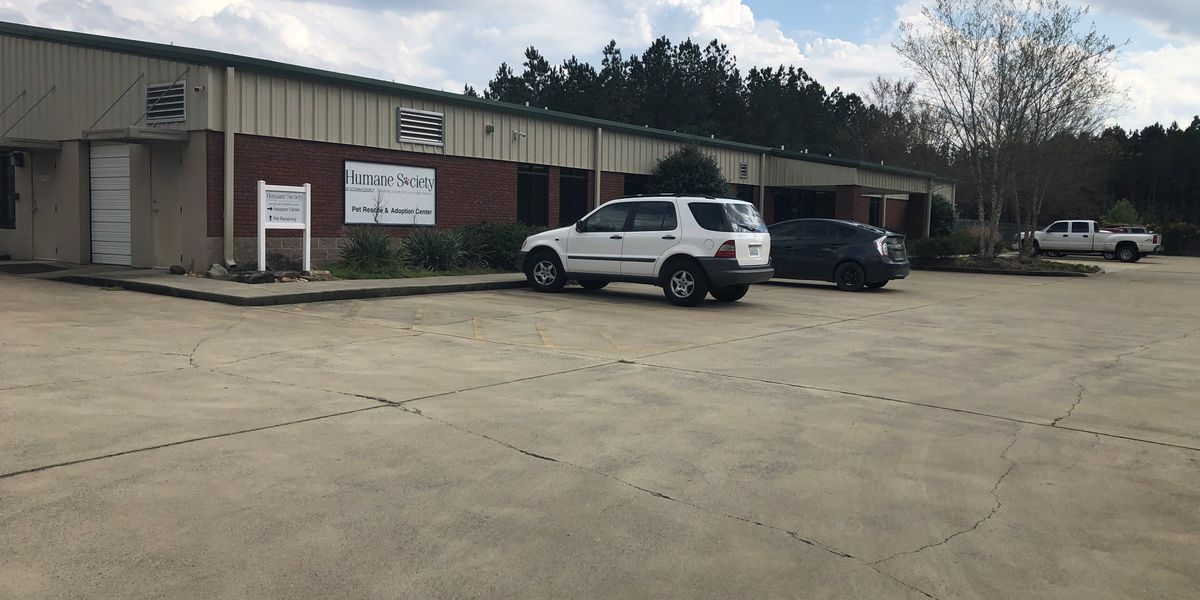 Distemper outbreak closes Gadsden animal shelter for two weeks