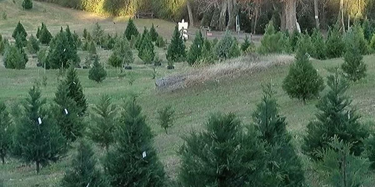 Nationwide Christmas tree shortage being felt in Alabama