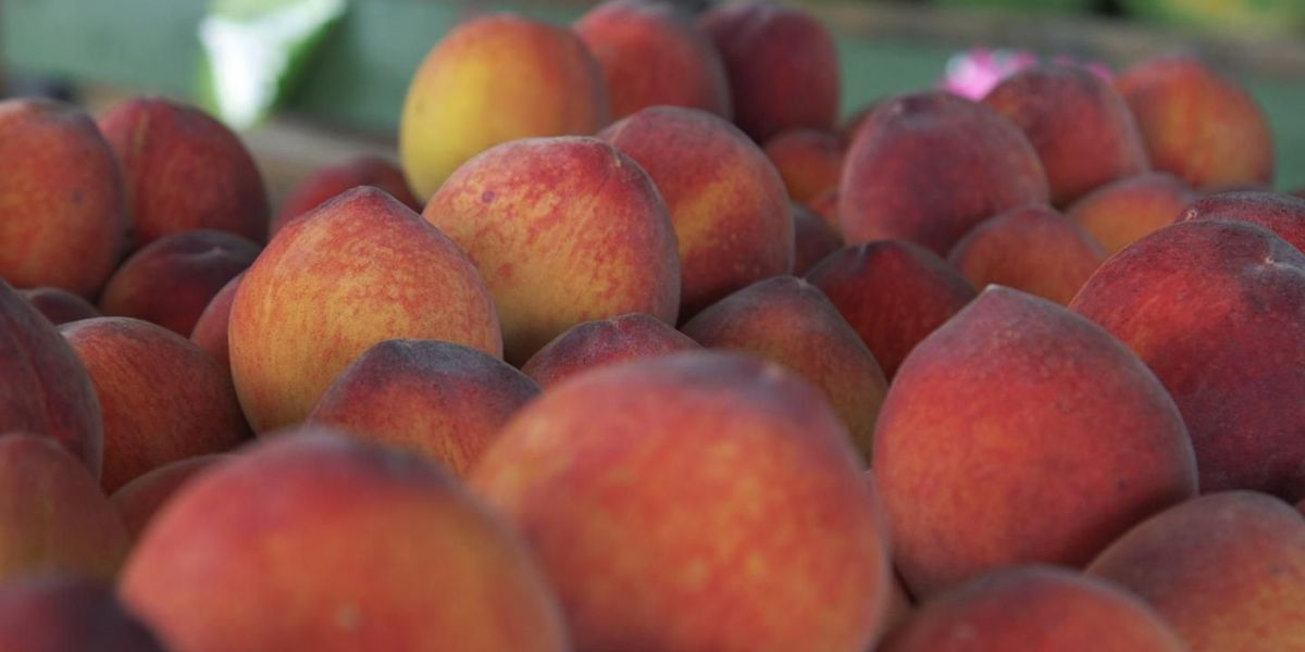 Magic City Weekend Spotlight: How to pick the perfect peach