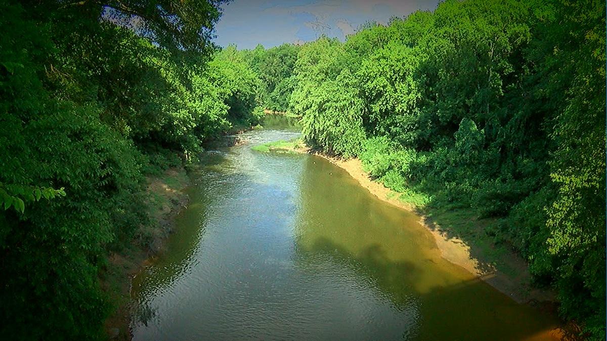 Sewage spill into Black Warrior river, killing wildlife