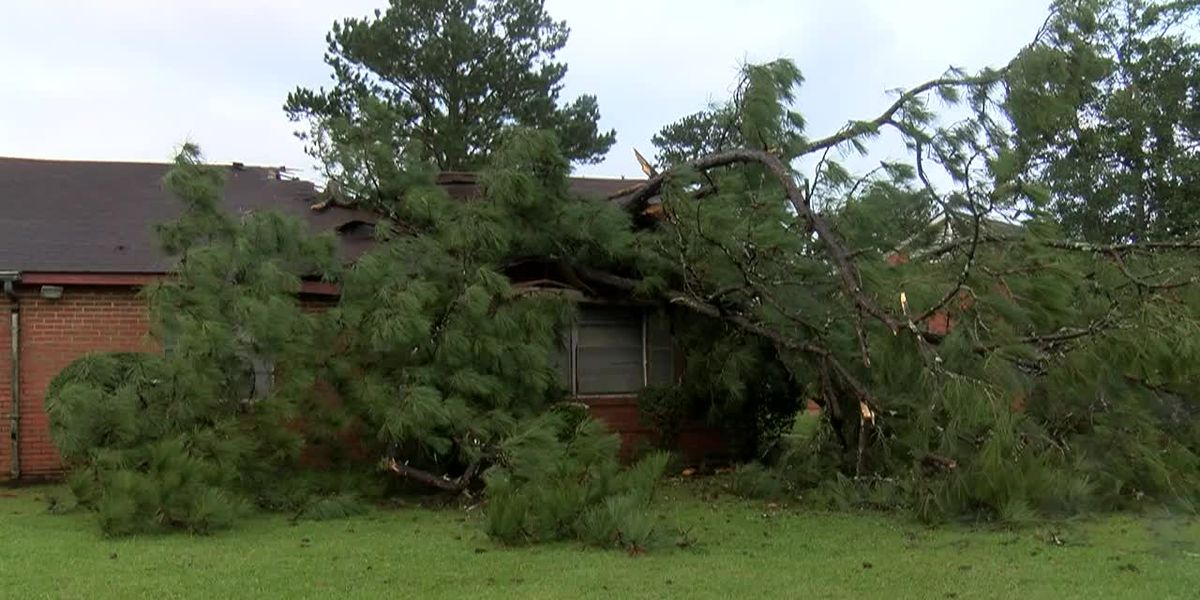 'It was awful': Tree falls onto house in Selma