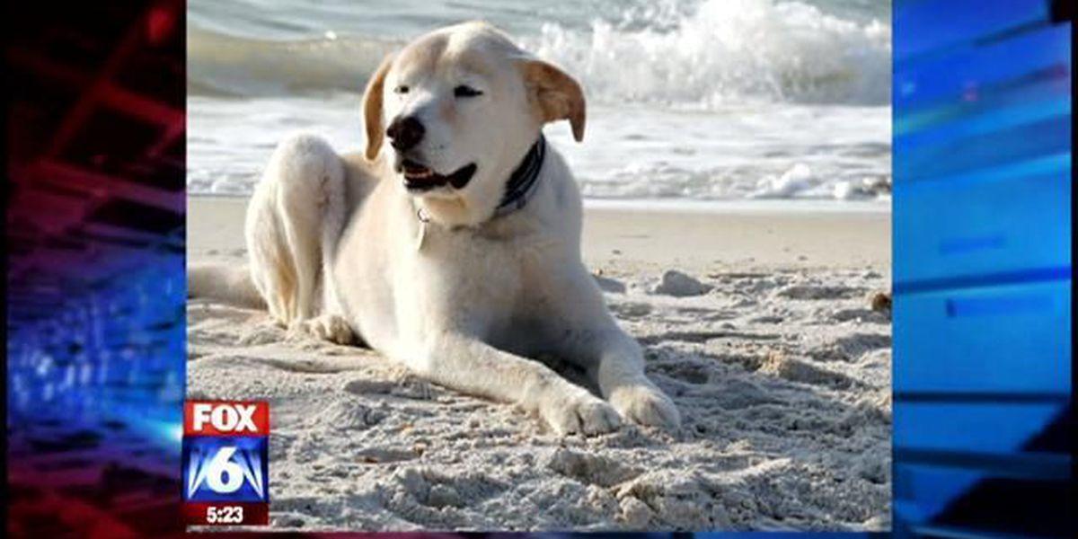 That's one happy pup.