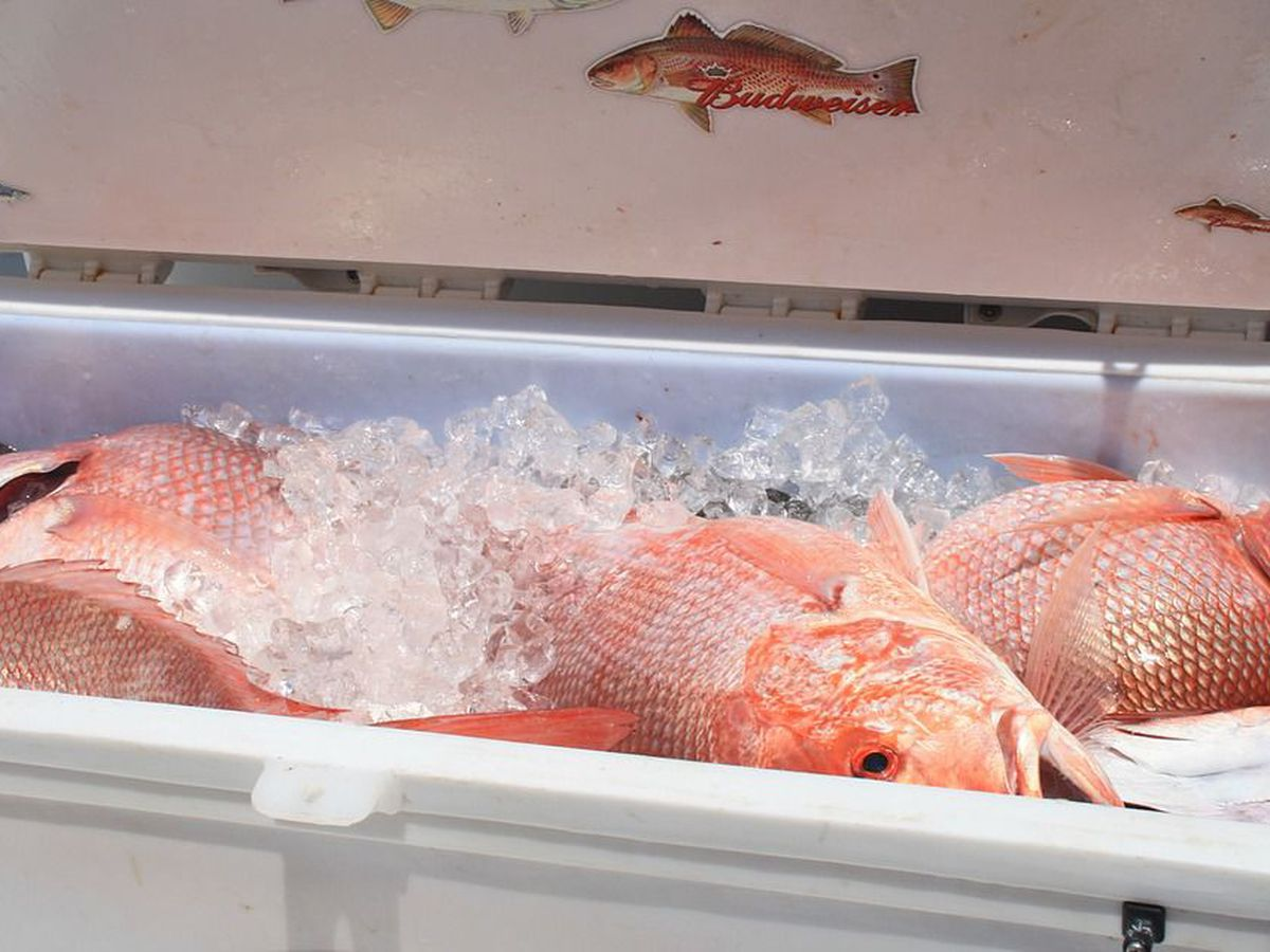 ADPH partners with state group to share which fish are safe to eat