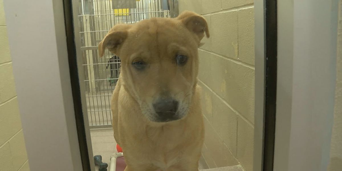 Adult dog adoption fees still being waived Greater Birmingham Humane Society
