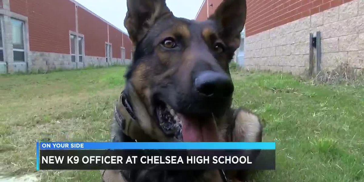 New K9 officer at Chelsea High School
