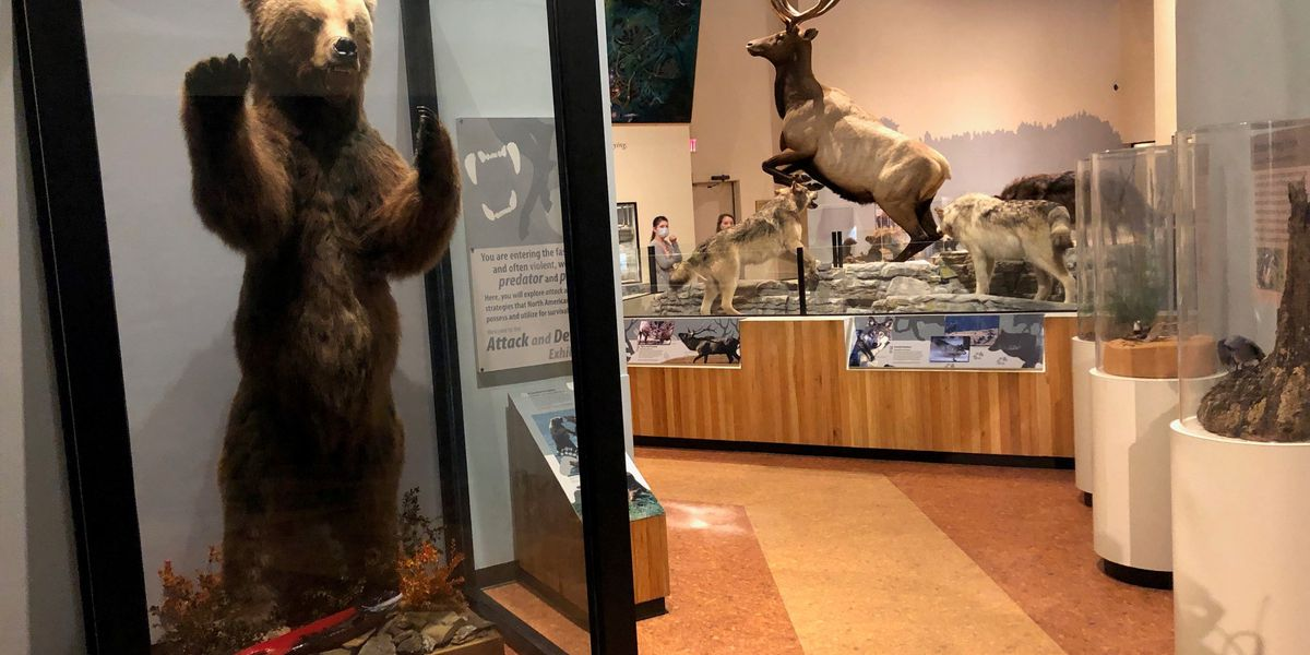 Anniston museums reopen to the public following two months of COVID-19 closings