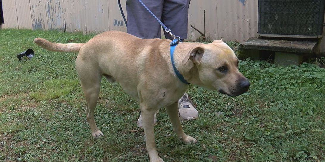 Family believes three-legged dog attacked would-be robber
