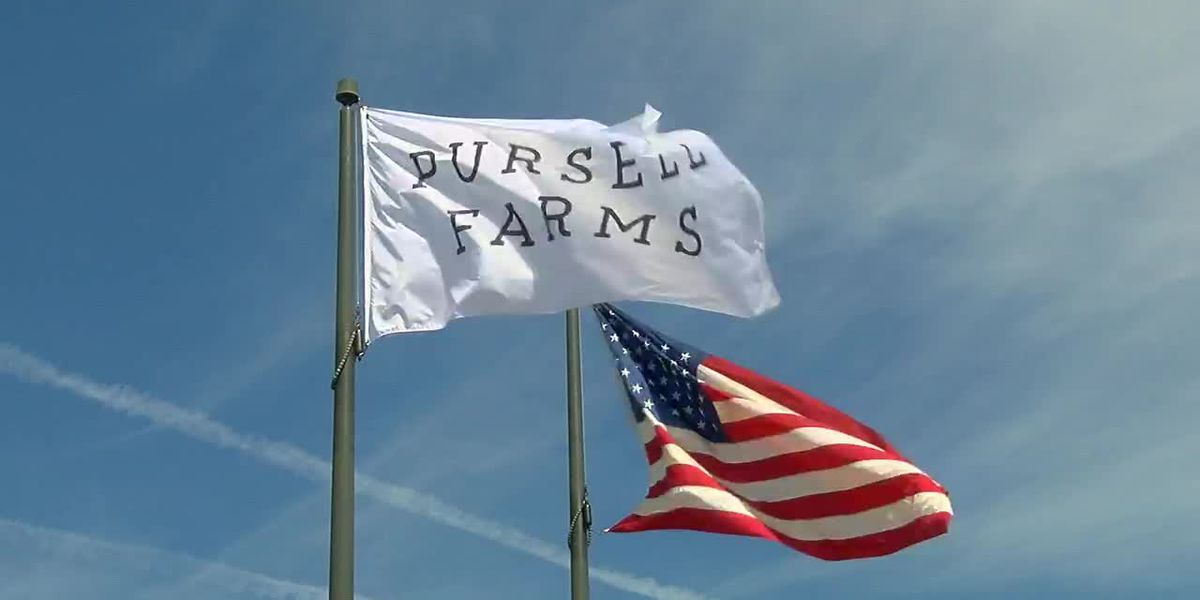 Absolutely Alabama: Pursell Farms