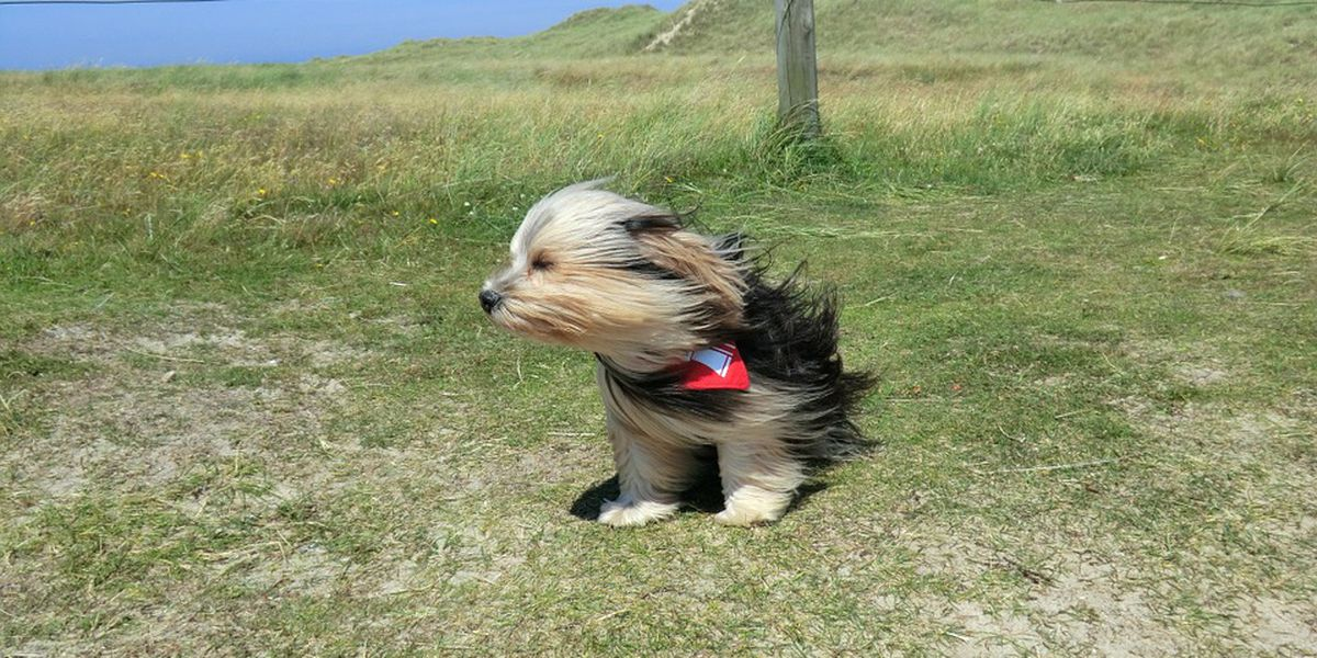 'Small Dog Warning' wind advisory issued; NWS calls for 50 mph gusts