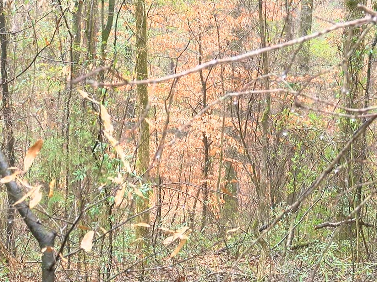 Hunting is about safety in the woods