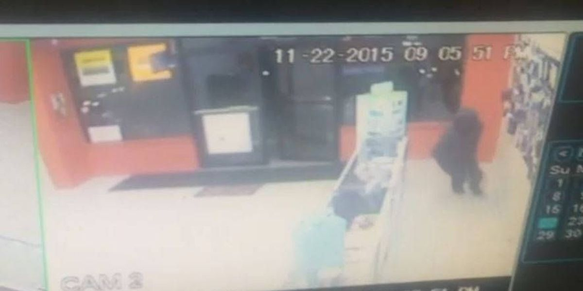Bibb Co. authorities searching for suspect in convenience store robbery