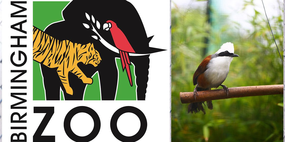 Two birds missing from Birmingham Zoo after habitat vandalized