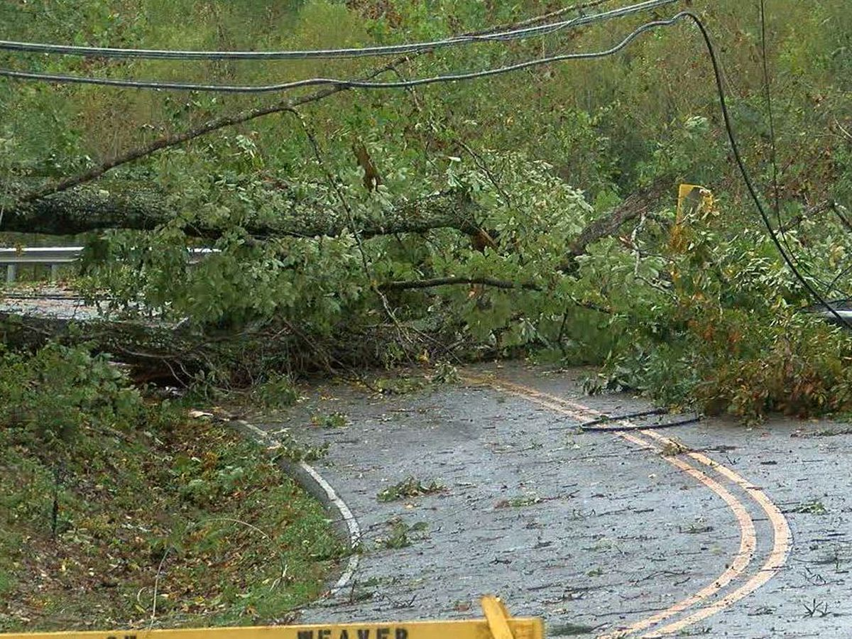 How to spot warning signs to help prevent trees from falling during storms