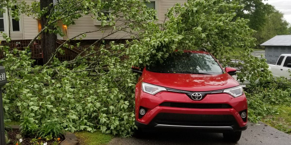 Trees fall on cars in Shelby County