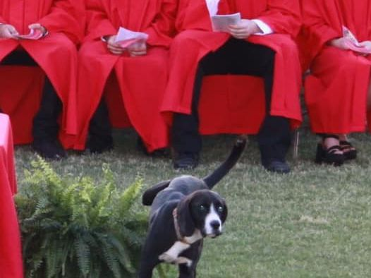 Pup and Circumstance: Pooch steals show at high school graduation