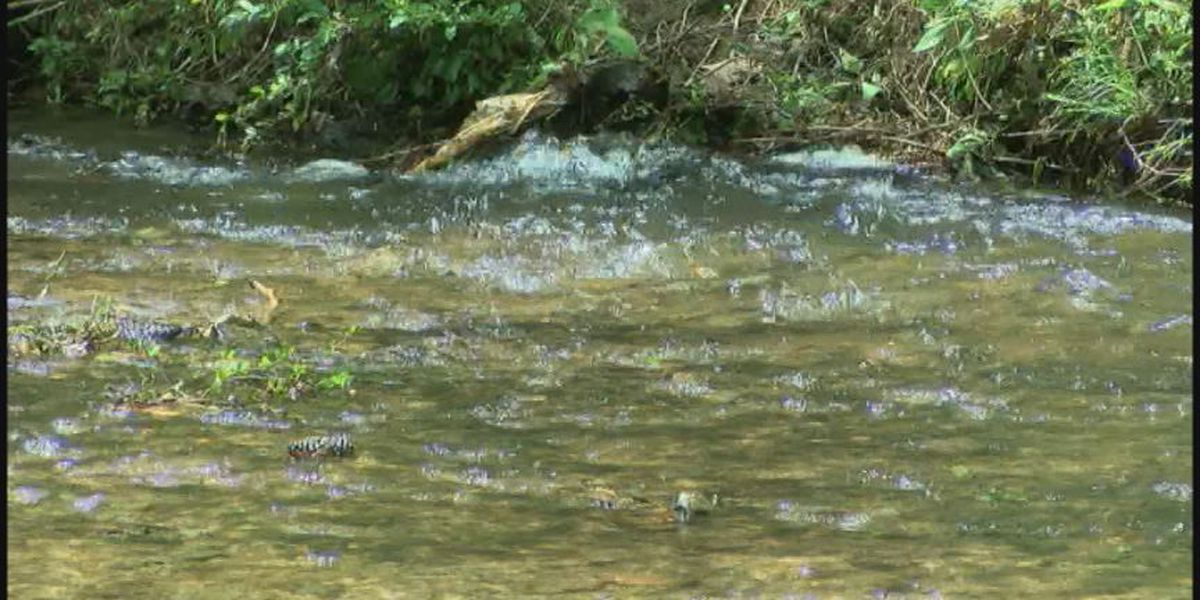Water protection groups release map showing sewage spills across Alabama