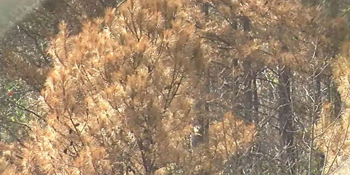 BWW investigating discolored trees near scene of February chemical spill