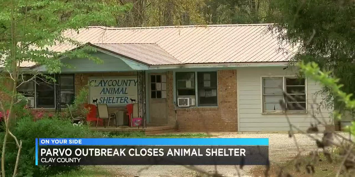 Parvo outbreak closes Clay Co. animal shelter