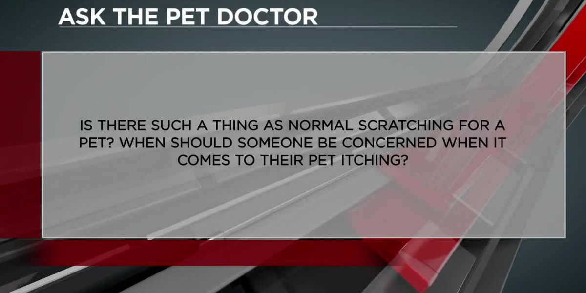 The pet doctor talks about your pet's health