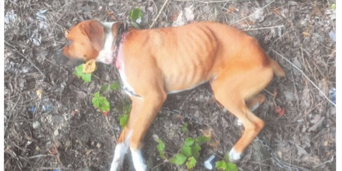 Deputies seek owner of injured dog found with chain cutting its neck