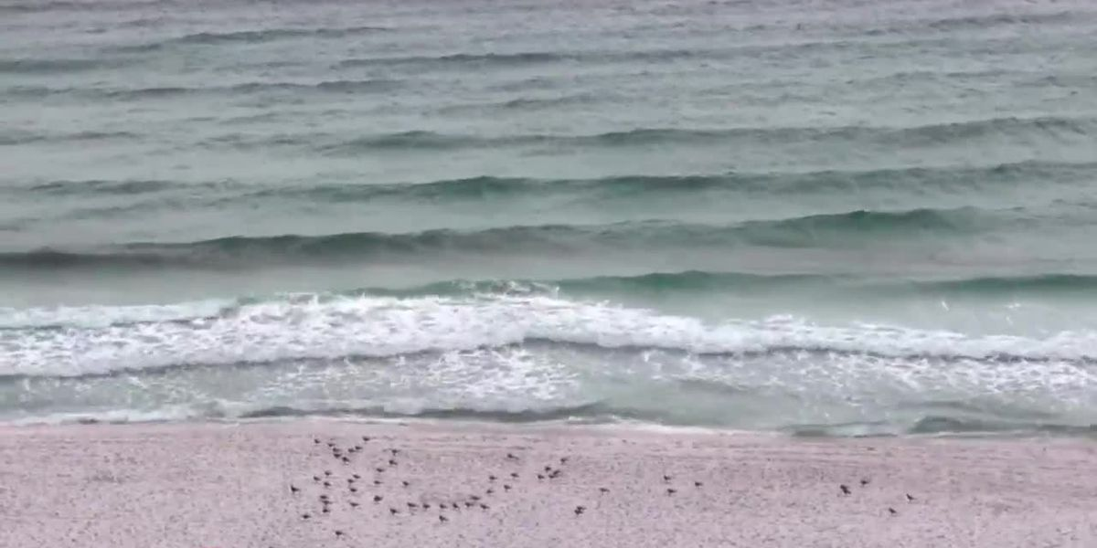Waves picking up in Destin, Fl from Tropical Storm Nestor SOURCE: Jeremy Irwin